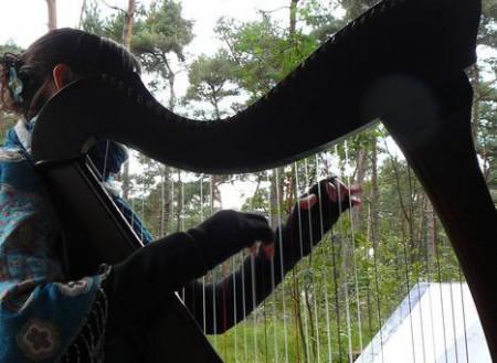 harpdonker